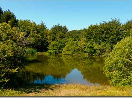 Lac Buono, Parme