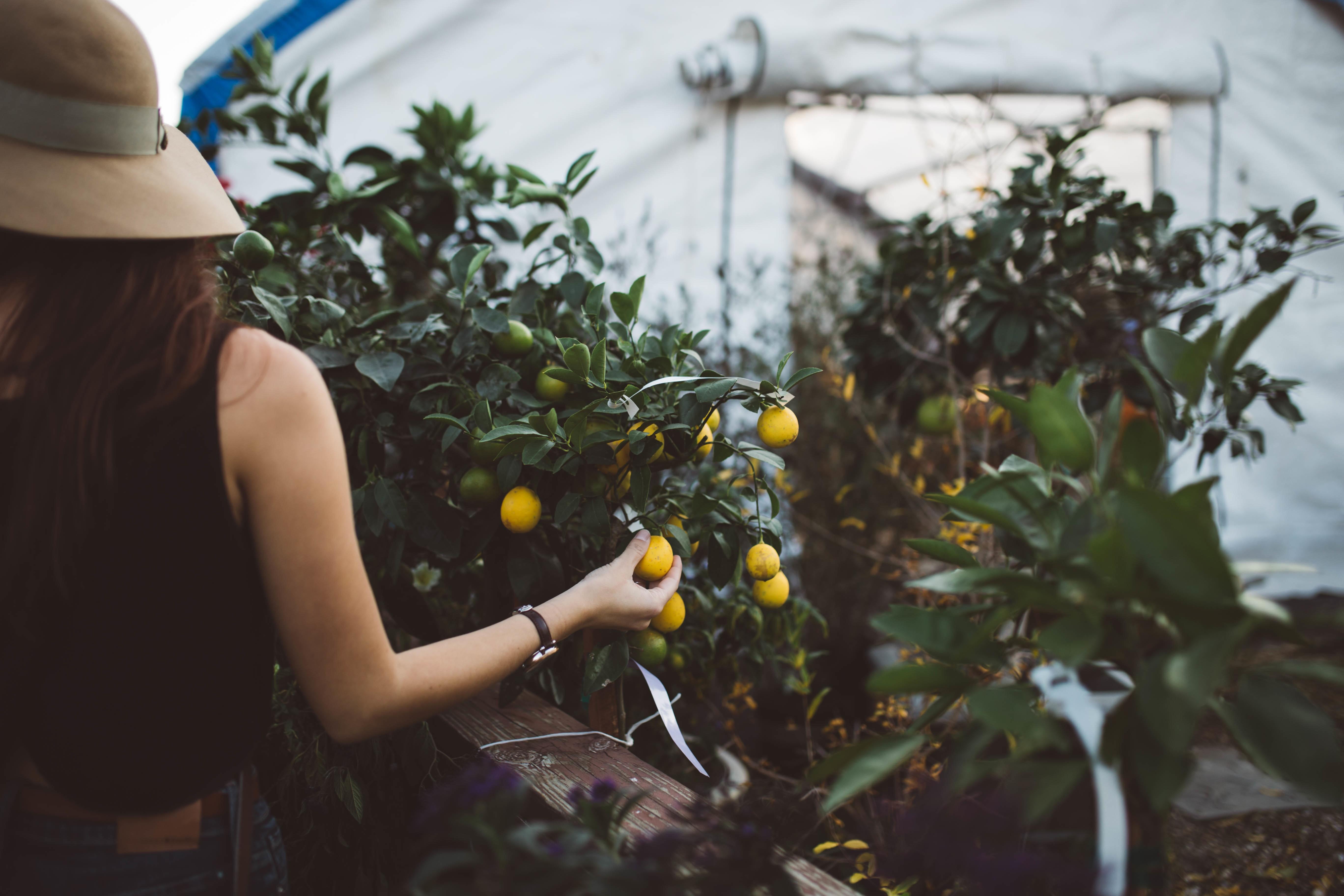 frutta-bio-Brooke-Cagle