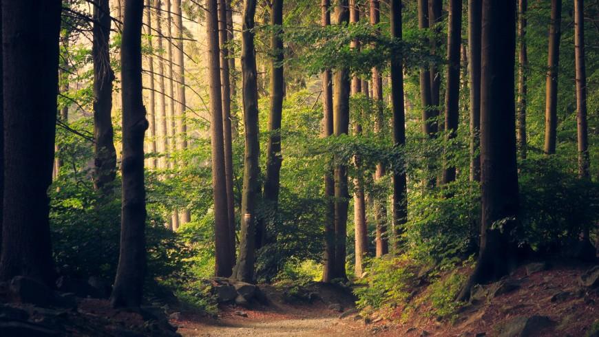 cadeau: Offrir une nuit dans un bois