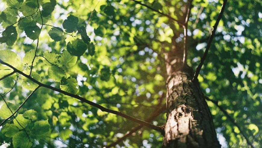 arbres et feuilles vertes