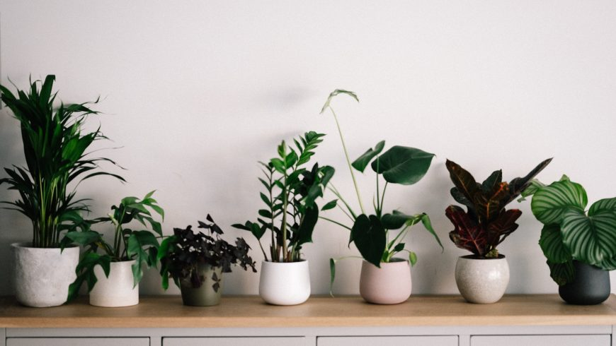 Différentes plantes